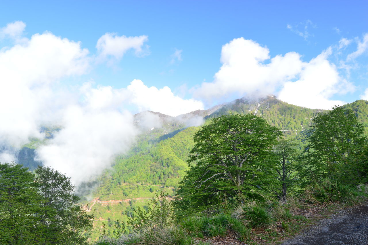 Ağaçlar ♥♡♥ Hopa Blacksea Karadeniz Mountains Nature Nature Photography Sultanselim Tree