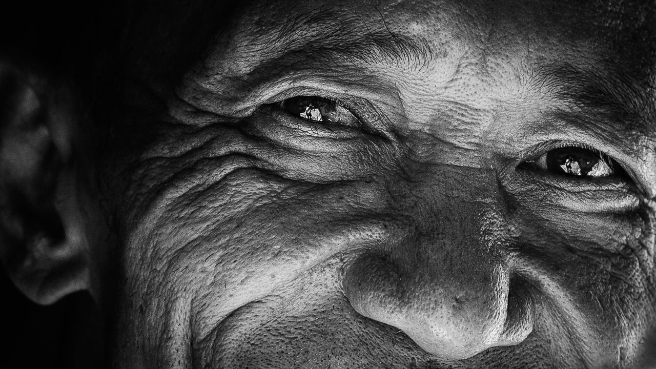 close-up, wrinkled, mammal, one animal, portrait, no people, outdoors, day
