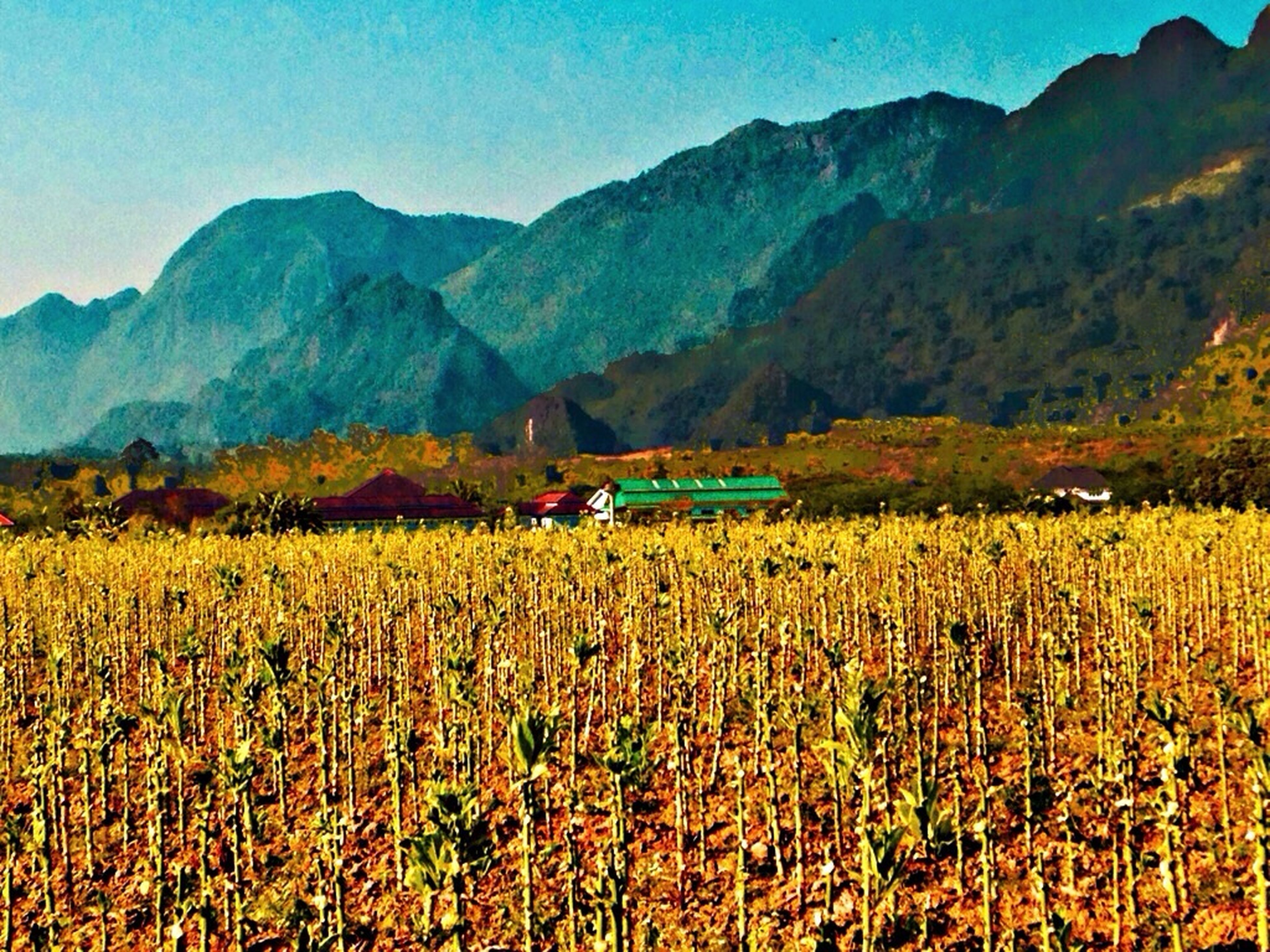 mountain, landscape, rural scene, agriculture, beauty in nature, field, tranquil scene, tranquility, scenics, farm, crop, growth, nature, yellow, mountain range, plant, flower, sky, cultivated land, non-urban scene