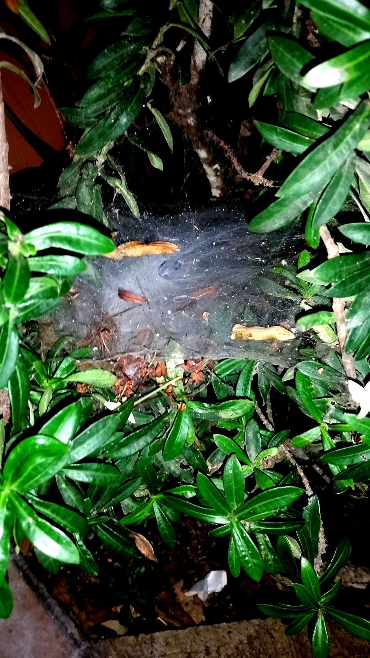 Leaf Water Plant Nature Growth Green Color Beauty In Nature Drop Day Close-up Outdoors No People Sunlight Freshness Animal Themes Floating On Water Fragility Spider Web Spiderweb Spider Webs Spiderworld Spiderwebs Spiders Web