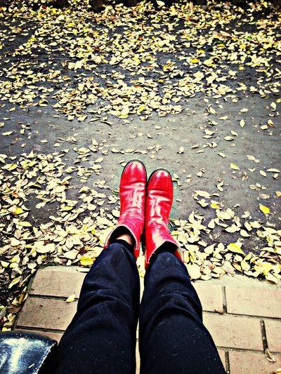 Autumn Red Enjoying Life Park
