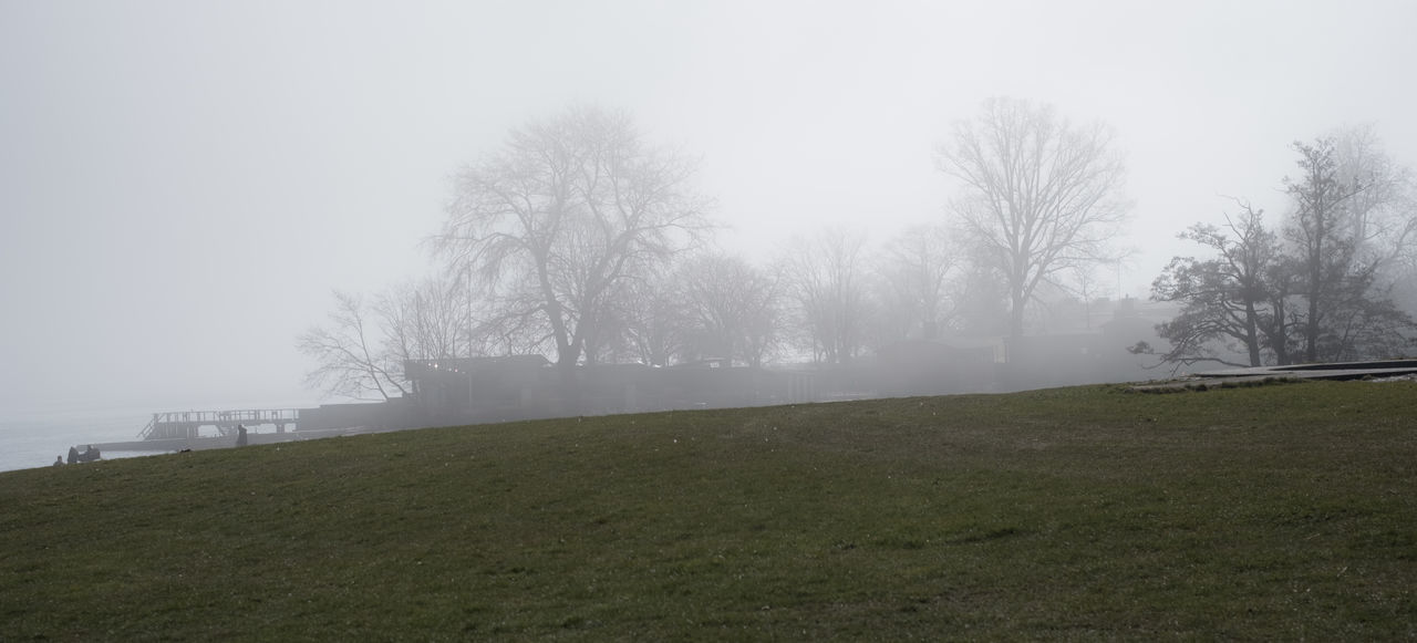 fog, foggy, grass, nature, tree, mist, weather, bare tree, tranquility, beauty in nature, day, outdoors, tranquil scene, landscape, hazy, no people, scenics, sky, branch