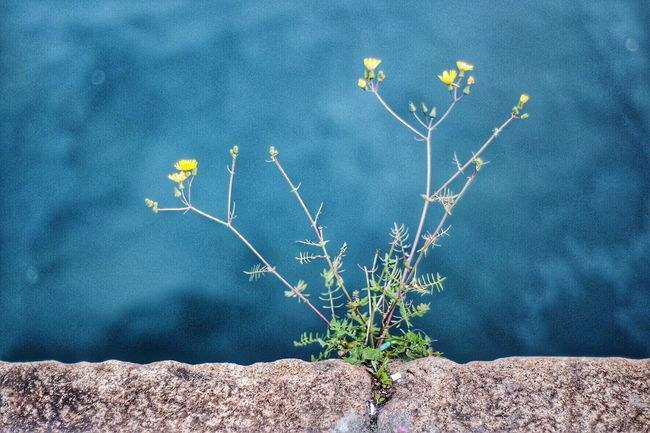 Showing Imperfection Flowers Dirt Dark Sea Force Of Nature Urban Nature Sea