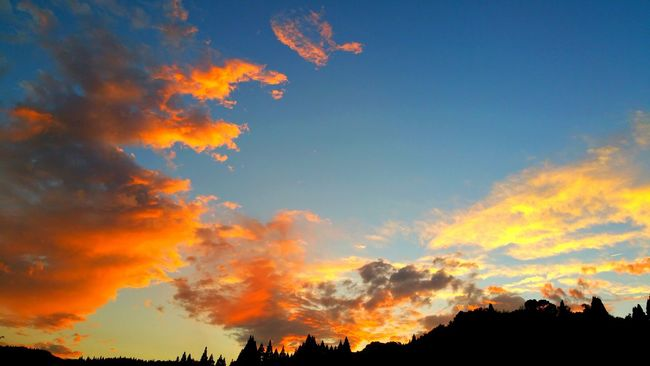 Sunset Scenics Silhouette Beauty In Nature Sky Tranquil Scene Tranquility Low Angle View Cloud - Sky Tree Orange Color Dramatic Sky Nature Atmosphere Cloud Atmospheric Mood Multi Colored High Section Outdoors Non-urban Scene Cloud Blue Moody Sky No People Nature