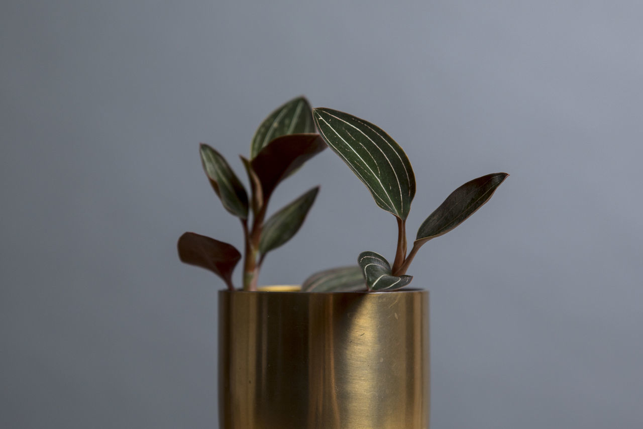 close-up colored background day gray background Growth Nature nature at home no people Orchid savings studio shot