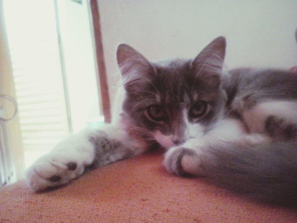 Domestic Cat Maryjuana