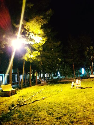 Night Illuminated Tree Men Only Men Lights On Night Lights Night Man On Bench Student Studying For Exams Studying Late Night Grass No People One Man Sitting