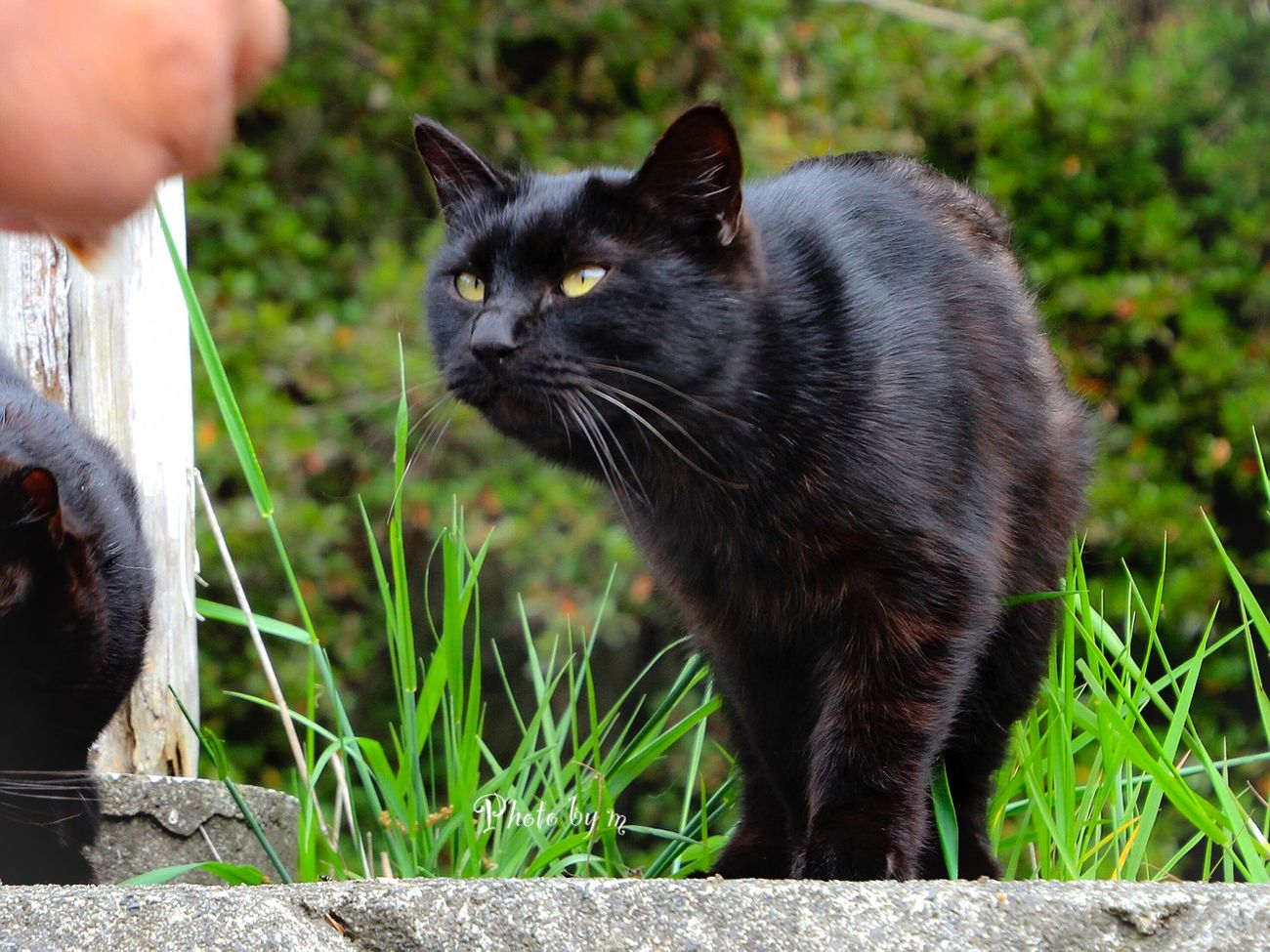 Cat Stray Cat 野良猫 猫 Cat♡ Animal Playing With The Animals 黒猫Love Black Cat Photography