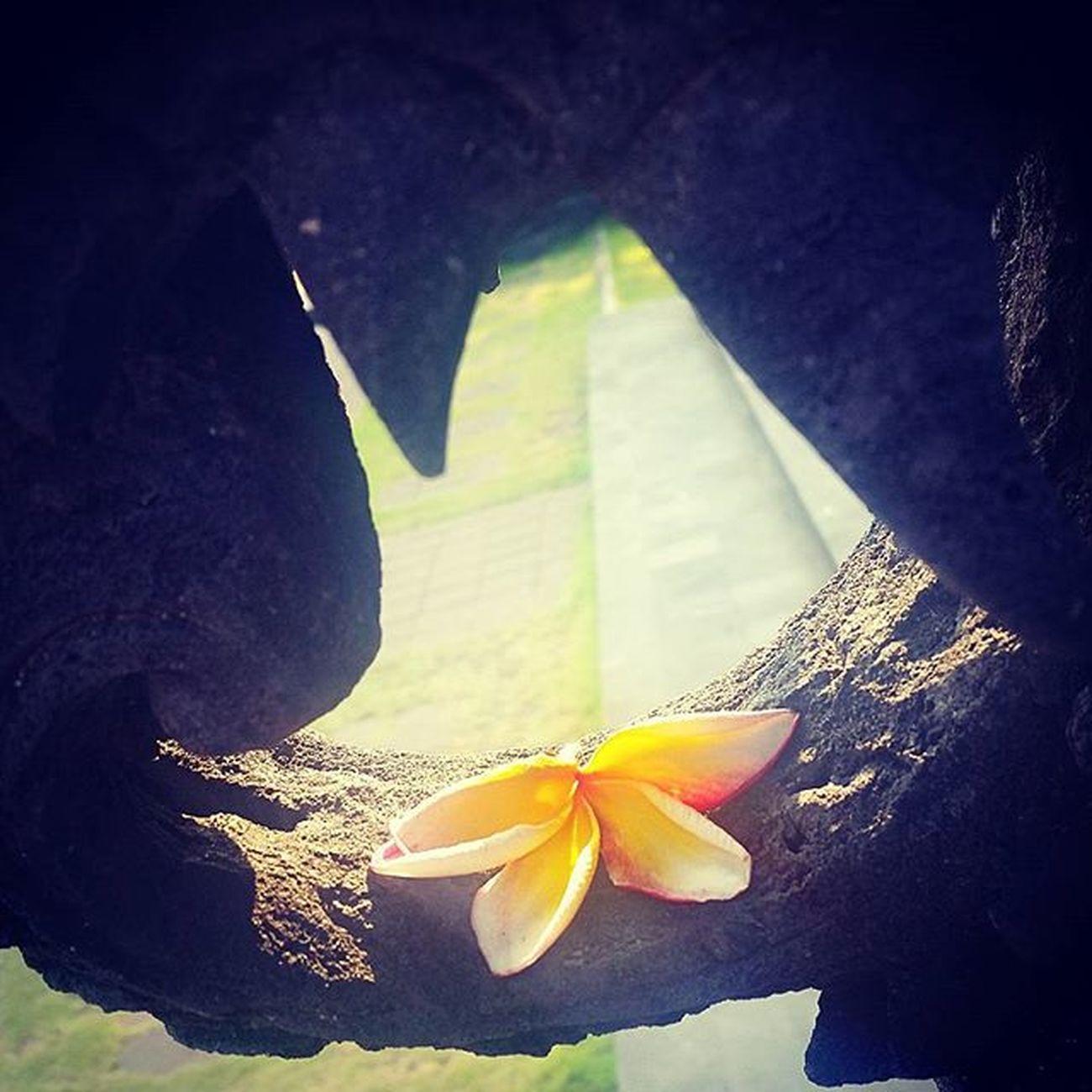 Ig_artistry Floweroftheday Fleuroftheday Flor Ig_flore IG_Flower Ig_naturelovers Naturelovers Natur Nature_perfection Nature Ig_naturaleza