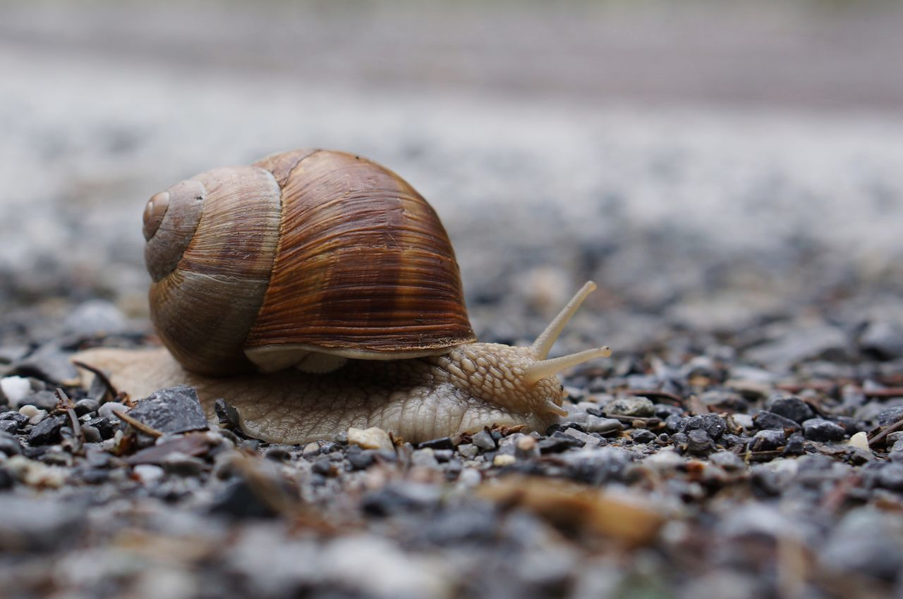 One Animal Animal Themes Snail Outdoors Day Animals In The Wild Surface Level No People Nature Close-up Macro Structure Pattern Grey Grey Color Slow Slow Life Calm Escargot Animal