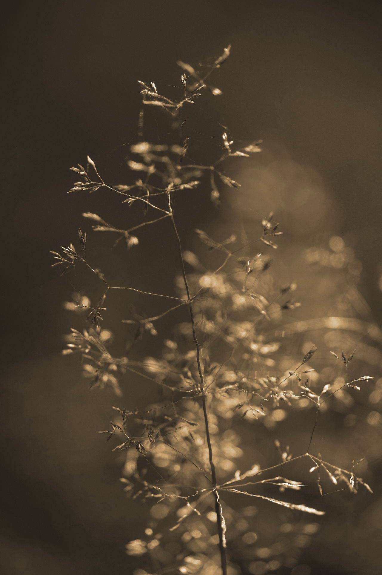 Blurred golden common bent in summer Abstract Art Artistic Background Beauty In Nature Bent Blank Blur Blurry Bokeh Closeup Common Delicate Empty Fragile Golden Grass Grassy Light Nature No People Outdoors Postcard Space Wild EyeEmNewHere Miles Away