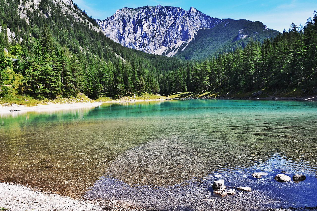 ✨... and then I think to myself...what a wonderful world✨ Pine Woodland Landscape Nature Beauty In Nature Mountain Forest Water Clear Fresh Austria Europe EyeEmBestPics EyeEm EyeEm Nature Lover EyeEm Gallery Save The Nature Photooftheday Lake Photography Traveling Travel Photography Summer Alps Bergsee Tragöss