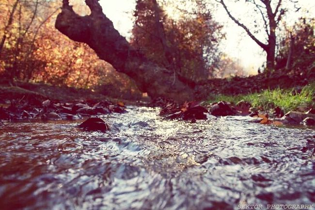 Naturelovers Nature_collection EyeEm Nature Lover Natural Beauty Water_collection Water Slides EyeEm Best Shots EyeEm Populer Photos Sektör Yapım