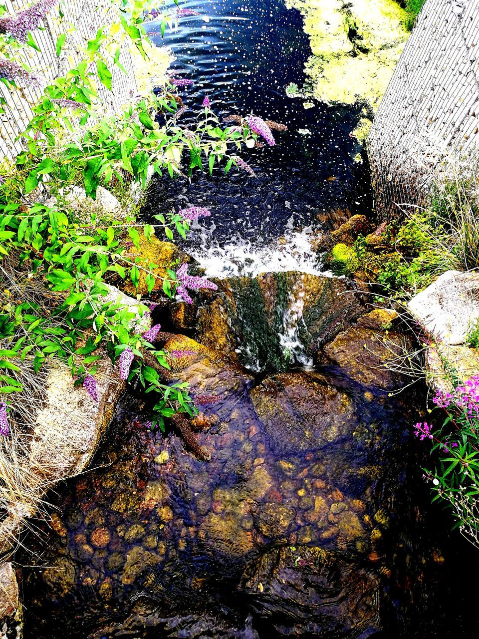 water, nature, day, no people, rock - object, outdoors, moss, beauty in nature, growth, tree
