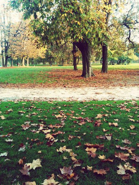 Autunno Autumn Colors Colori Landscape Paesaggio Parcosempione Milan,Italy ColorPalette Colour Of Life
