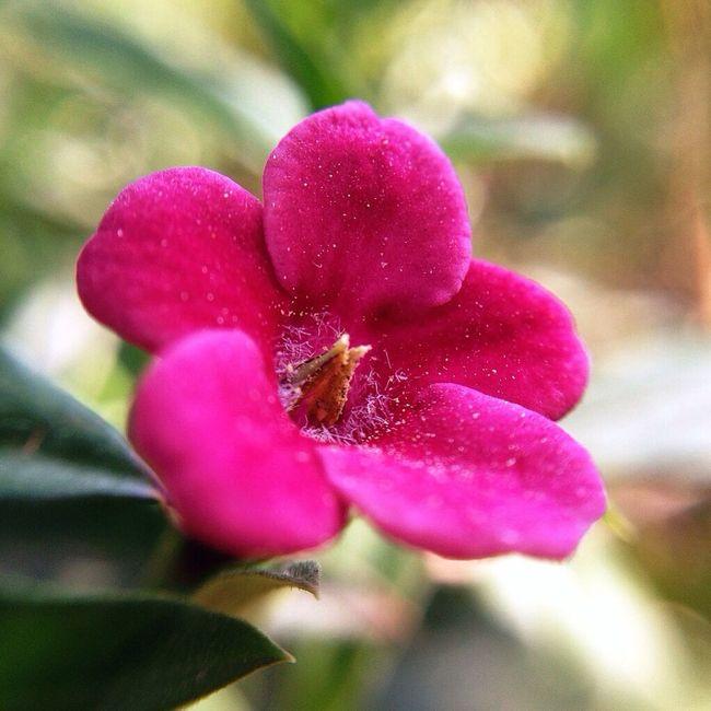 Flowerporn Macro_collection Macroclique EyeEm Nature Lover
