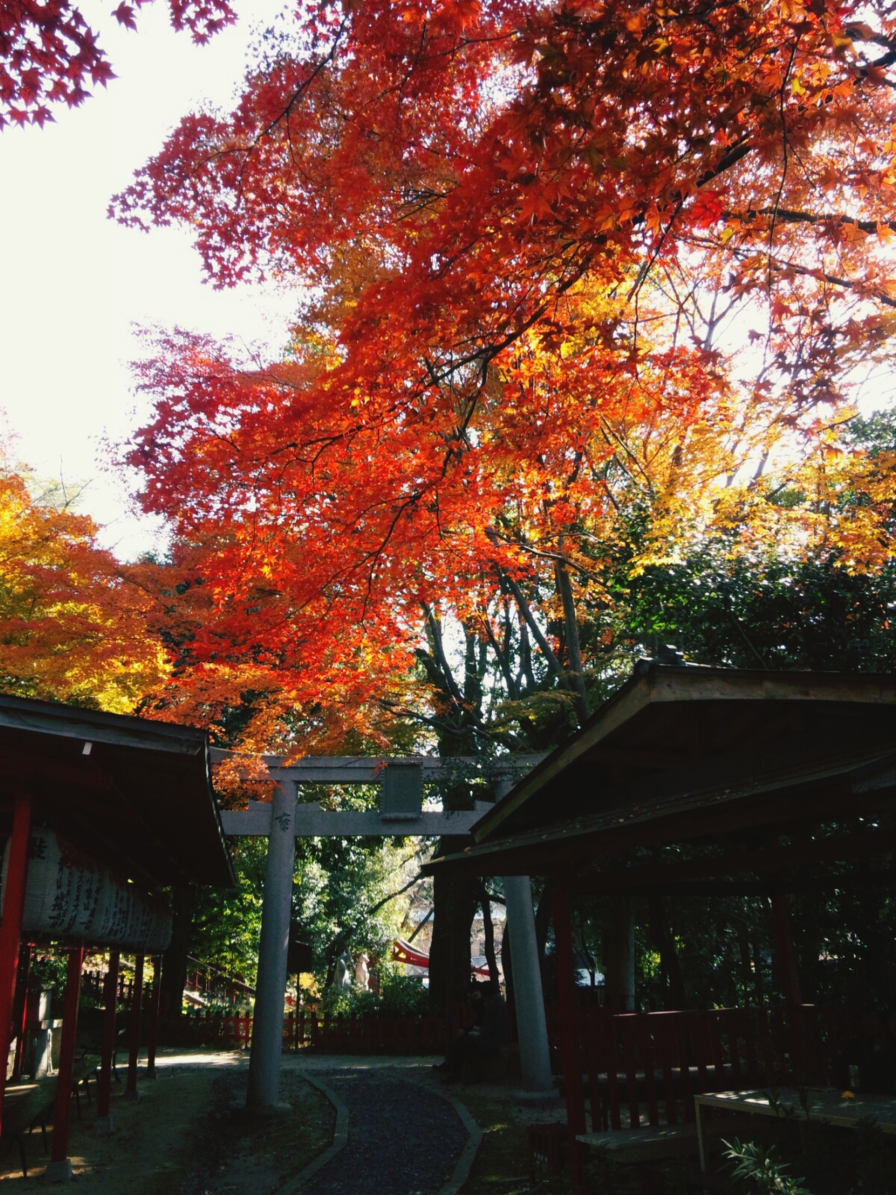 tree, autumn, change, orange color, season, bench, branch, built structure, nature, growth, park - man made space, tranquility, outdoors, wood - material, architecture, building exterior, beauty in nature, no people, leaf, railing