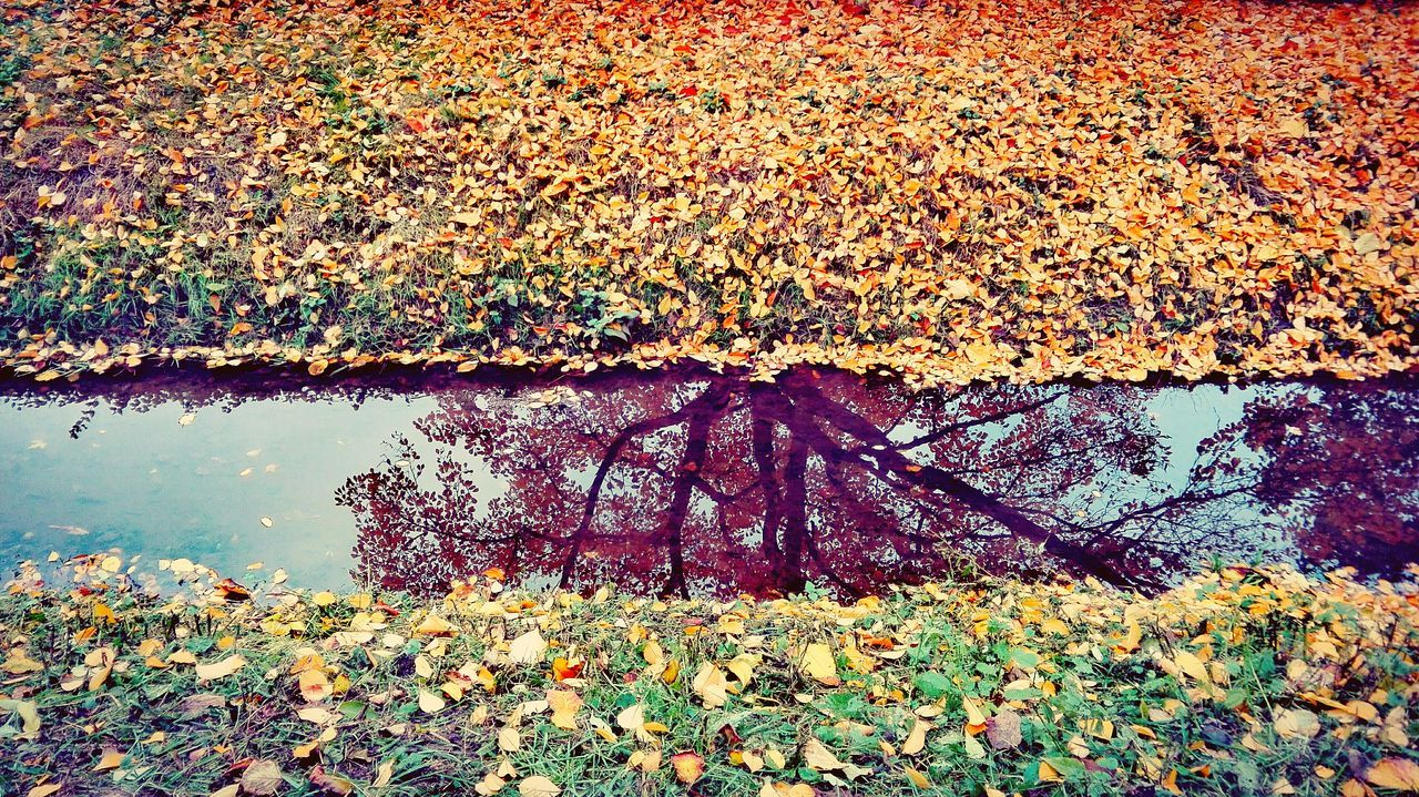 Sunlight Water River Outdoors Nature The Places I've Been Today Autumn 2016 October 2016 How Is The Weather Today? Autumn🍁🍁🍁 Autumn Is The Spring Of Winter 🍂🍁 Autumn Is Here 🍂🍁 Autumn Leaves A Walk In The Park Autumn Colors Beauty In Nature TreePorn Treelife Mirroring In Water