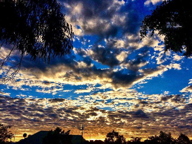 Evening sky Evening Sky Beauty In Nature Tree Sky Nature Cloud - Sky Scenics Dramatic Sky Blue Sunset Outdoors Tranquility
