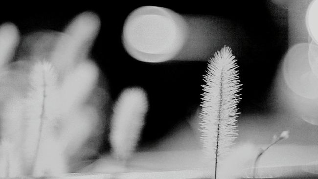 Plant Nature Autumn Focus On Foreground Beauty In Nature No People Blackandwhite Photography Monochrome Black & White Modern Cityscape Light And Shadow Black And White Blackandwhite Tokyo Days Urban Scene City Life Bokeh_kings Bokeh Nature Bokeh Bokeh Photography Bokeh Love Bokeh Lights Bokeh Bubbles