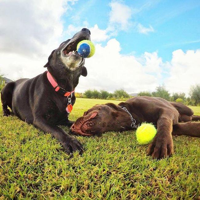 Dog Park - Wandi Dogs Dogpark Gopro Goprodog perth westernaustralia australia pets doglovers Capture The Moment