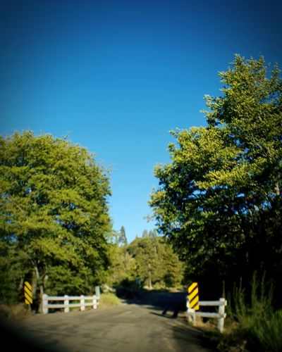 Back Country Road Outdoors Nature Bridge Trees Enjoying Life Hanging Out ForTheLoveOfPhotography Fresh On Eyeem  From My Point Of View Beauty In Nature Eyeem Market EyeEm Abundance Blue Sky Eye4photography  Outdoor Photography Nature Photography EyeEmBestPics Perspective