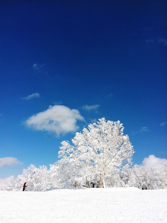 Winterscape Wintertime Winter Wonderland Treescollection Trees Treescape Tree_collection  Tree And Sky Trees And Sky Iced Snow Covered Snowcapped Snowy Ski Skiing Skier Sky Cloud - Sky Clouds And Sky