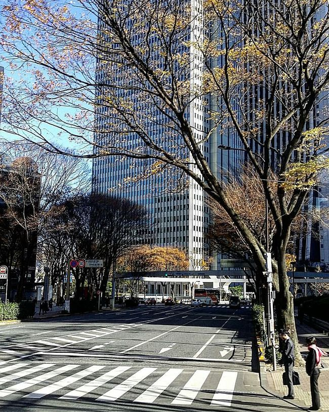 Cold But Sunny December Days  Tokyo Winter Trees Buildings Beautiful December Morning Japan Street Photography Tokyo Street Photography Streetphotography Drive By Photo Tokyo Tokyo,Japan Tokyowinter 2016 TokyoDec2016