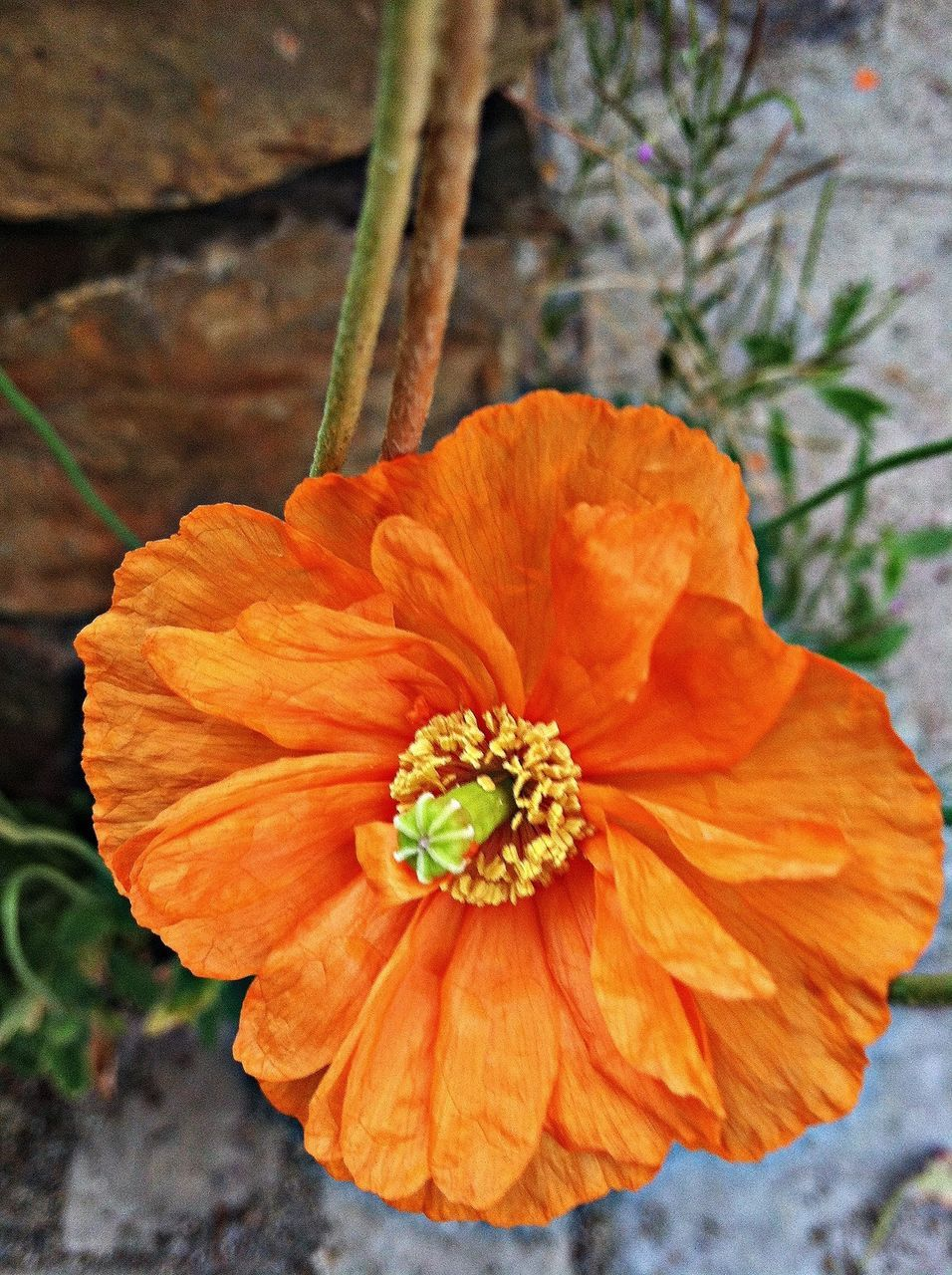 Close-Up Of Orange Flower Blooming Outdoors