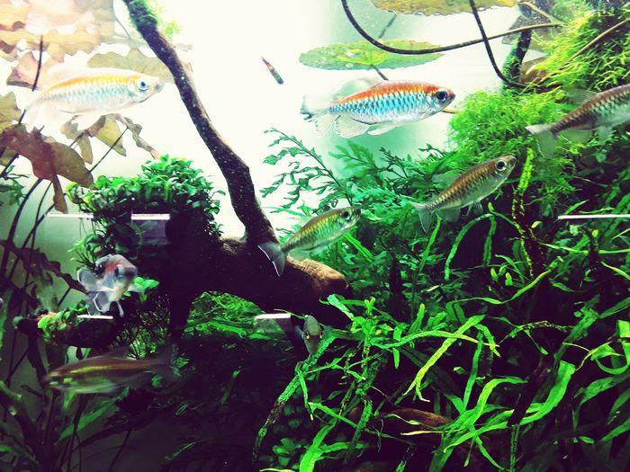 Aquarium Life Aquarium Fish Growth Leaf Plant Nature Tree Day No People Close-up Beauty In Nature Freshness