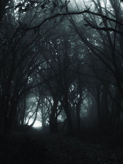 Tree Nature Forest Scenics Landscape Beauty In Nature No People Haunted Creepy Creepy Forest WoodLand Landscape_Collection