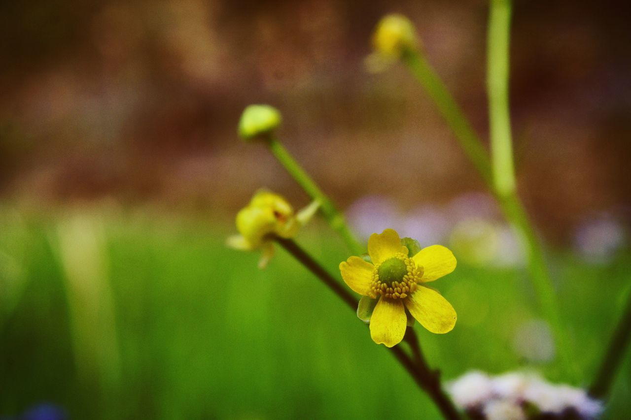 flower, growth, yellow, fragility, nature, beauty in nature, petal, green color, flower head, focus on foreground, plant, freshness, day, outdoors, no people, blooming, close-up