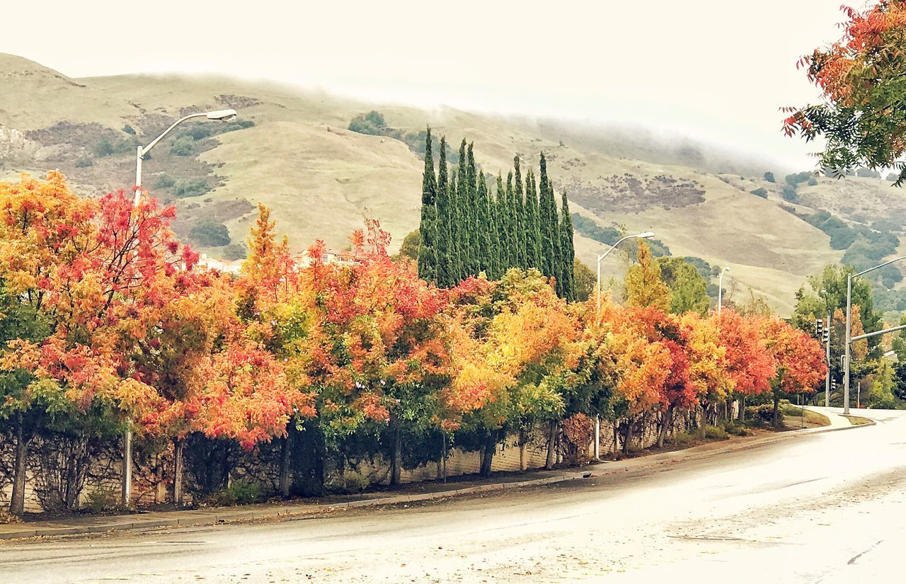 Colors Tree Autumn Change Growth Tranquility Nature Scenics Road Outdoors Tranquil Scene No People Day Mountain Beauty In Nature