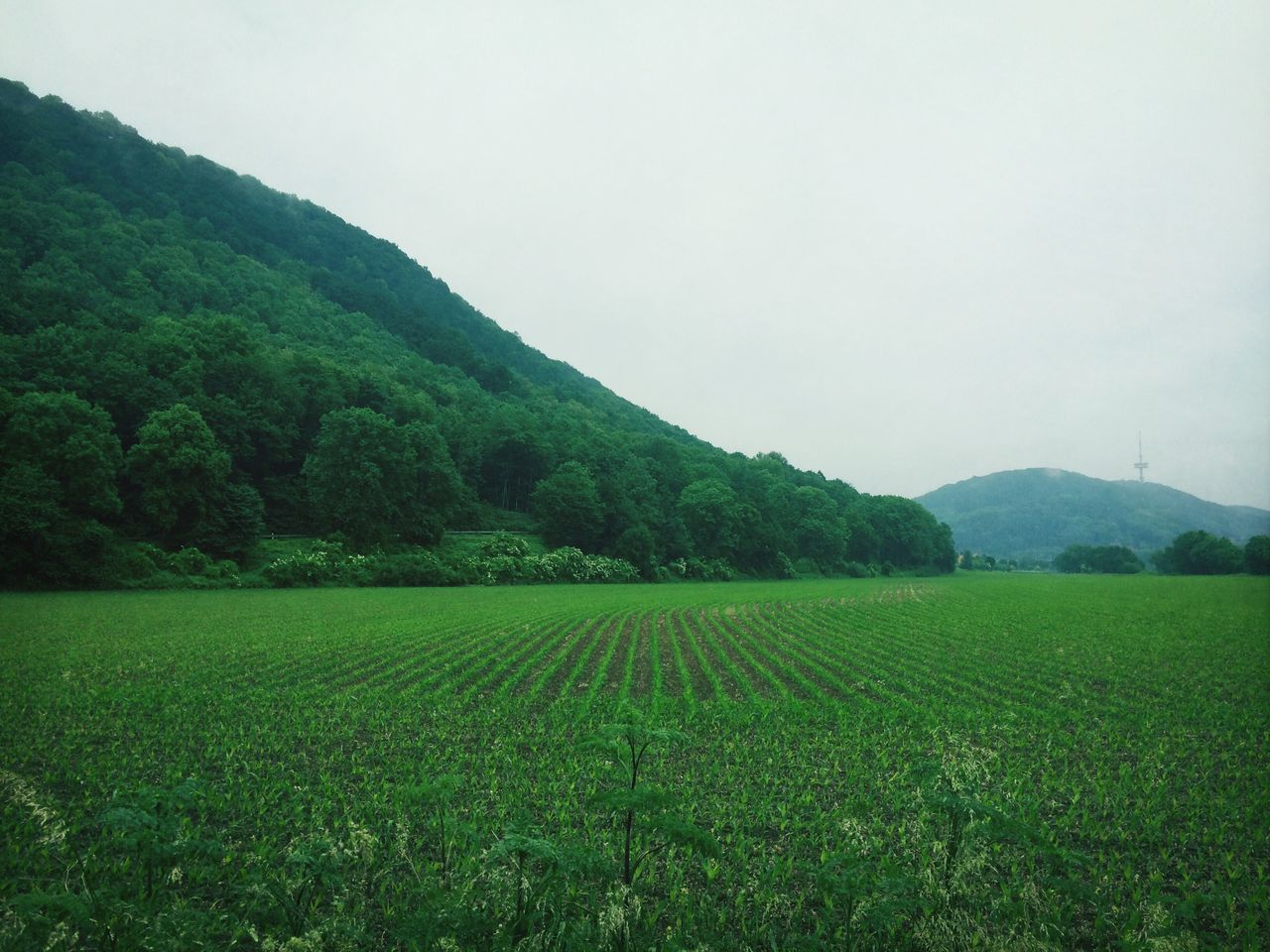 Beautiful stock photos of peaceful, Calm, Field, Germany, Grass
