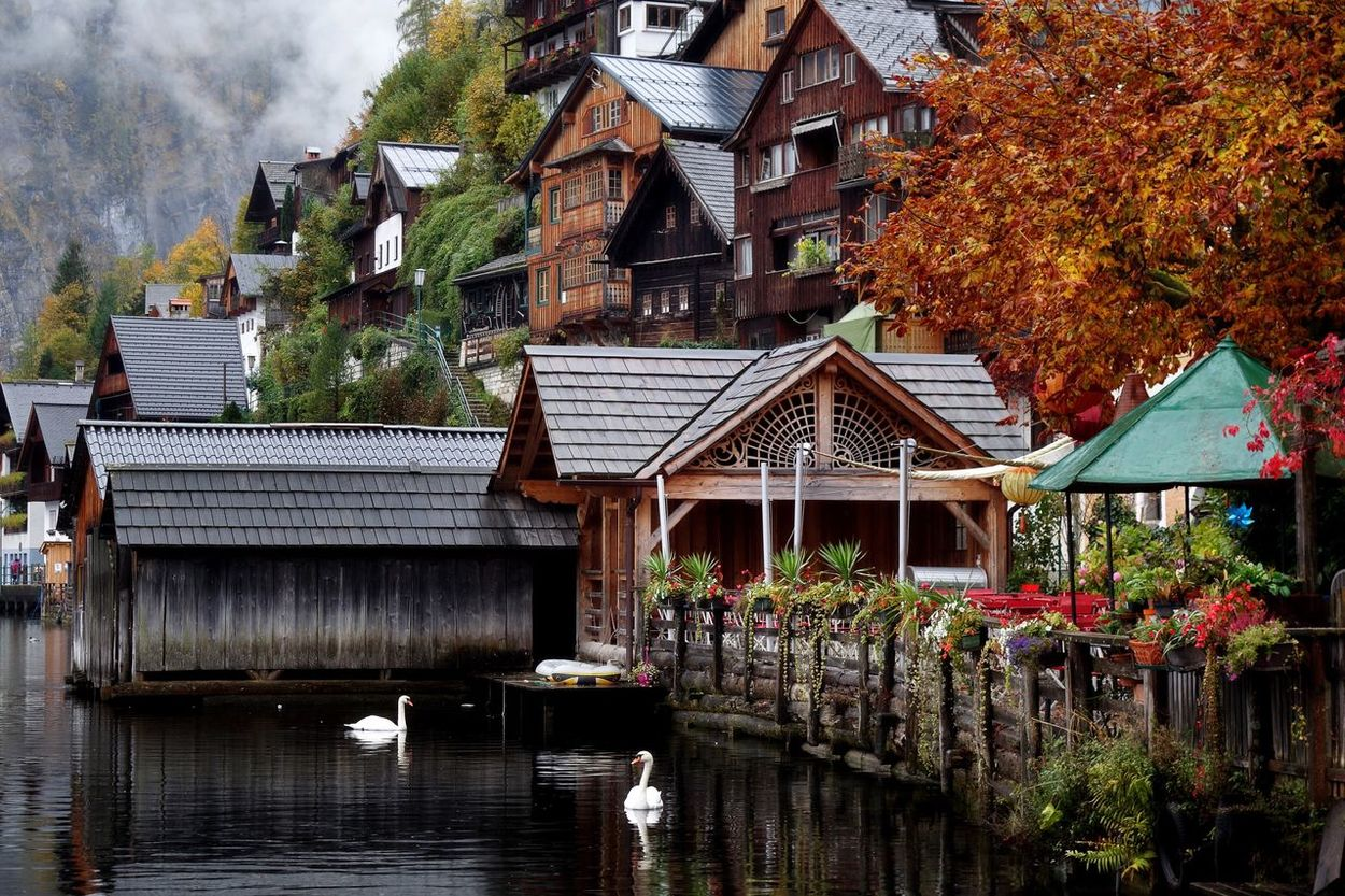 Water Autumn Nature Tranquility Austria ❤ Austria Hallstatt, Austria 💙 Hallstätter See Hallstätter See Salzkammergut, Austria Swan Swans Birds Lake Lakeshore Lakefront Waterfront Peaceful Tranquil Scene Tranquil Fall Colors Fall Beauty Scenics Travel Autumn Outdoors