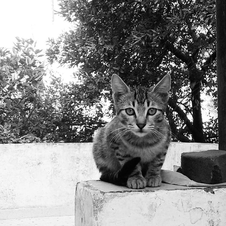 Cat Cats Cat Photography Pets Animal Photography Blackandwhite EyeEm Taking Photos Eyeem Best Shots - Animals EyeEm Animal Lover The Week Of Eyeem Cats Of EyeEm Monochrome Photography EyeEm Gallery Blackandwhite Photography Eye4photography  Animals Kitten Getting Inspired
