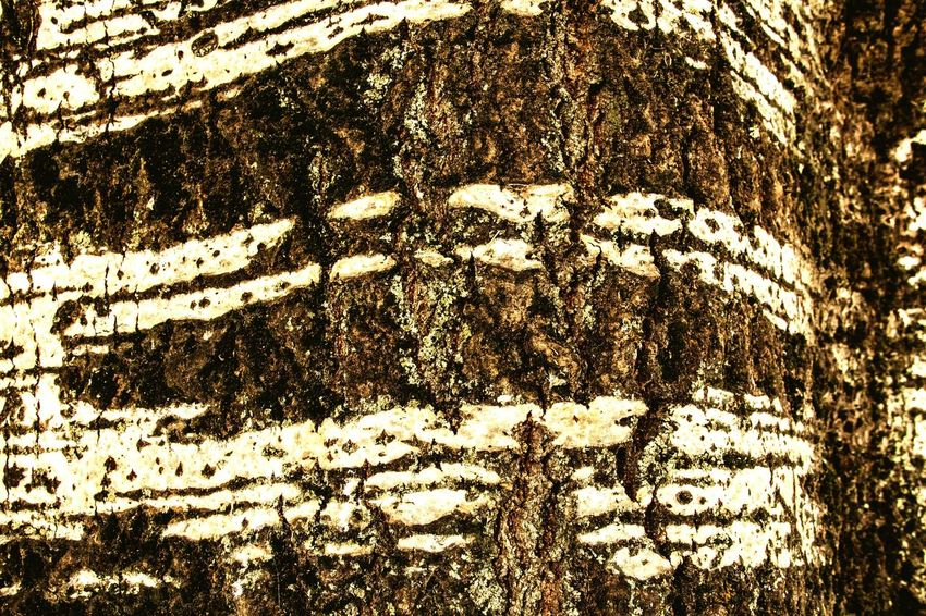 Backgrounds Full Frame Textured  Pattern Abstract Outdoors Multi-layered Effect EyeEm Streetphotography Canonphotography Eye4photography  EyeEm Selects Eyeemphoto Photographer First Eyeem Photo Canon EOS Canonitalia Tree Trunk Close-up