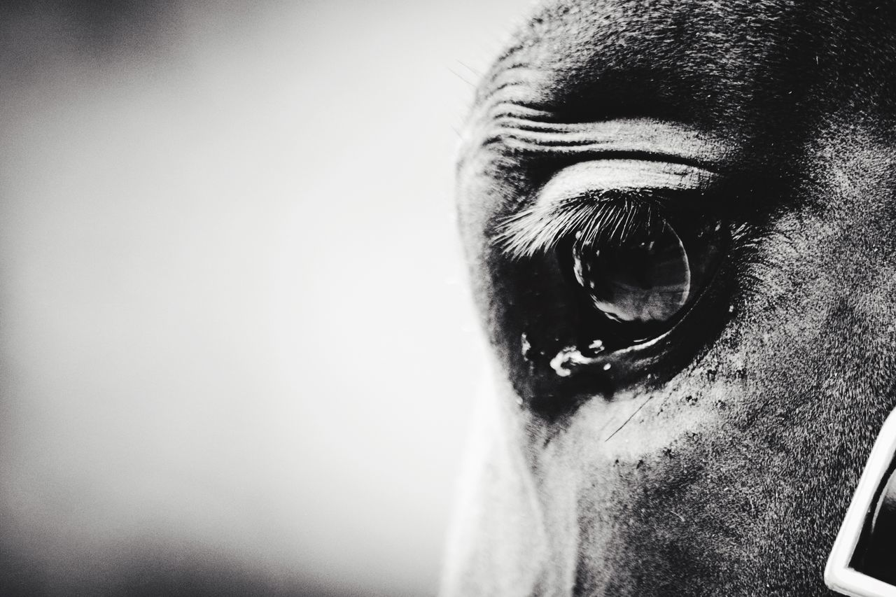 Horse Eye4photography  EyeEm Best Shots Eyes Big Eyes Taking Pictures EyeEm Nature Lover Animal_collection Animals London Market Bestsellers Feb 2016 Nature Photography Horses Blackandwhite Photography Horse Photography  Horse Riding Closeup In Nature Close Up Nature Close Up Horse Horse Eyes Nature Nature_collection Animal Themes Animal Photography Animal Head  Animal Love
