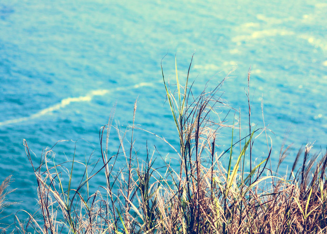 Nature Growth Close-up No People Sky Beauty In Nature Outdoors Day Cliff View Minimalism Copy Space Blue Blue Sea Reeds, Weeds, Marshland, Marsh, Scenics Blue Wave Tranquility Summer Summer Vibes Ready For Summer EyeEm Nature Lover