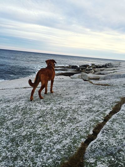What is the Atlantic Ocean? Dogs Exploring Halifax Canada's Ocean Playground Crystal Crescent
