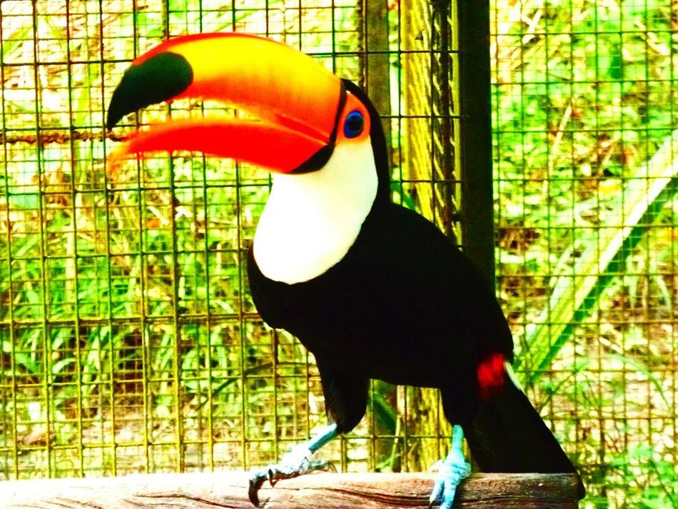 Animal Portrait EyeEm Nature Lover Eyeembirdlover Natural Beauty Amazing_birds