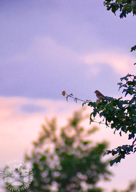 Bird and sunset - a great compilation. Bird Photography Bird Animals Vogel Birds_collection Birdwatching Vogelfotografie Animal Themes Animal Photography Animal_collection Animal Love Sunset Sonnenuntergang Tree Baum Sunset_collection Sonnenuntergang Im Sommer