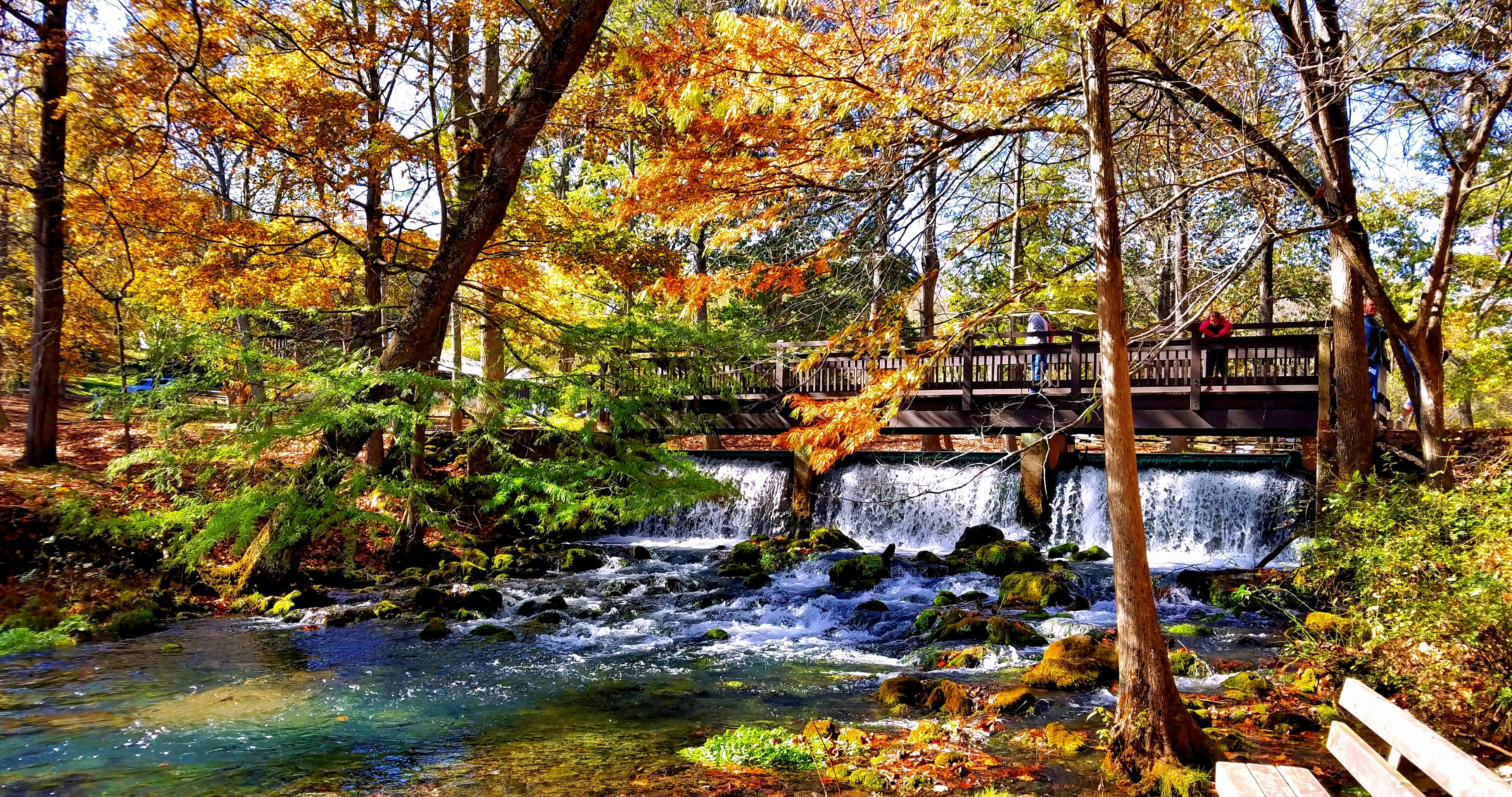 tree, water, autumn, tranquil scene, scenics, tree trunk, change, season, bridge - man made structure, tranquility, built structure, forest, beauty in nature, stream, nature, branch, orange color, river, non-urban scene, day, outdoors, footbridge, woodland, growth, flowing water, flowing, vacations, tourism, no people, bridge