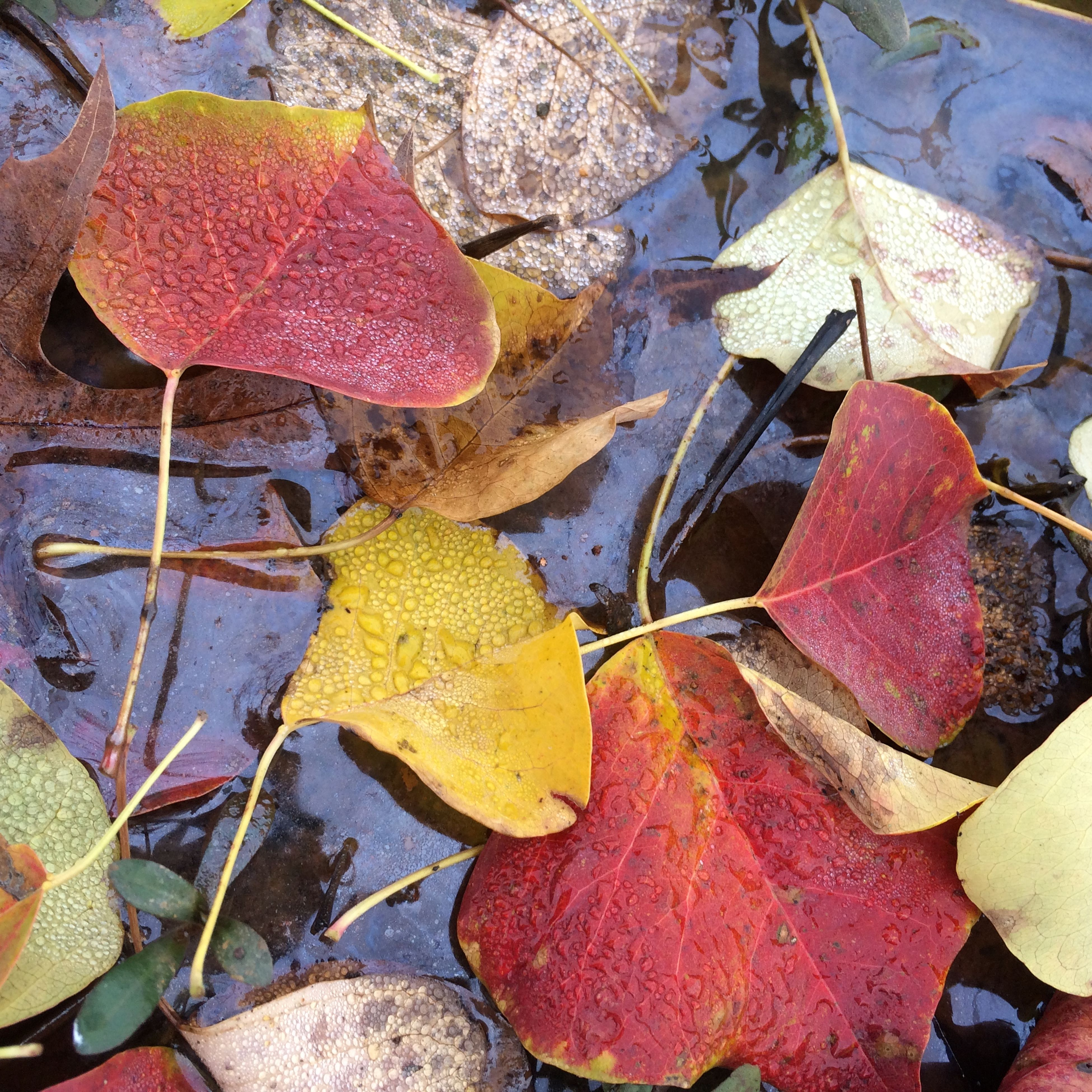 autumn, leaf, change, season, leaves, high angle view, dry, nature, fallen, red, day, close-up, outdoors, water, maple leaf, orange color, fragility, beauty in nature, leaf vein, no people