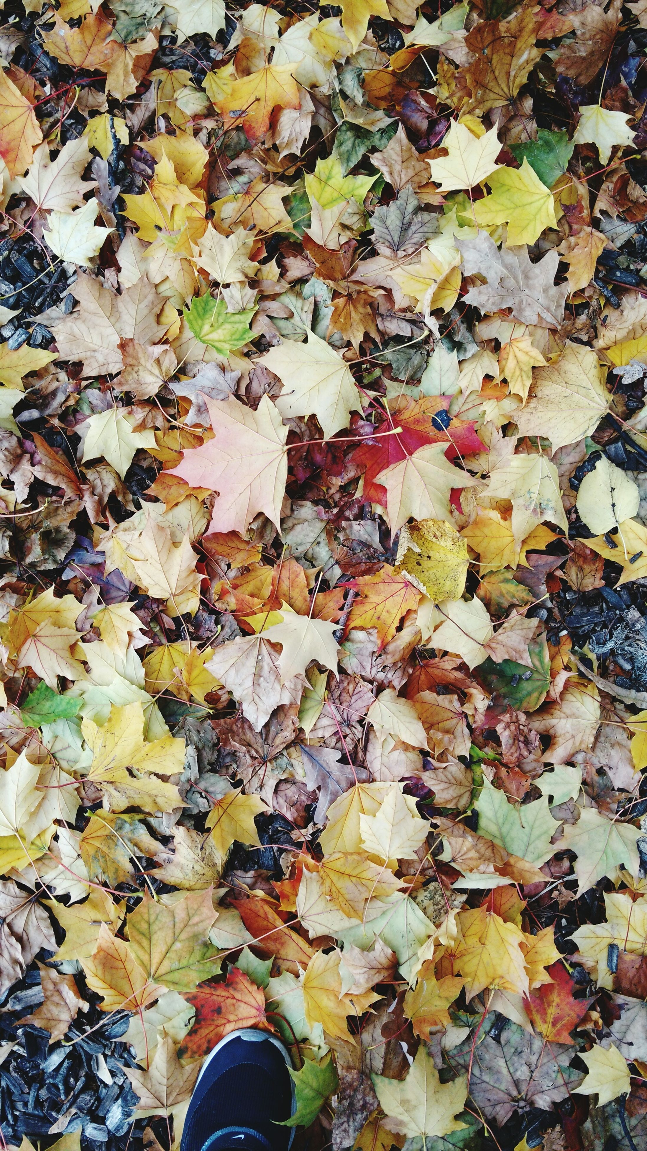 low section, autumn, leaf, person, change, shoe, personal perspective, high angle view, leaves, season, dry, standing, fallen, lifestyles, unrecognizable person, leisure activity, human foot
