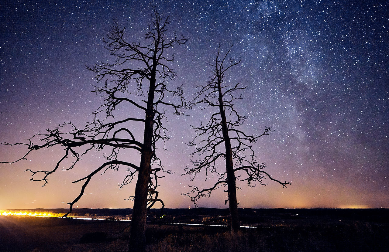 Two dead trees at night with stars and the Milky Way on the sky Bare Tree Beauty In Nature Darkness Deadwood  Dramatic Sky Landscape Milky Way Mysterious Mysterious Landscape Nature Night Night Sky No People Outdoors Scenics Silhouette Sky Star - Space Stars Tranquil Scene Tranquility Tree Tree Trunk Trees Twilight