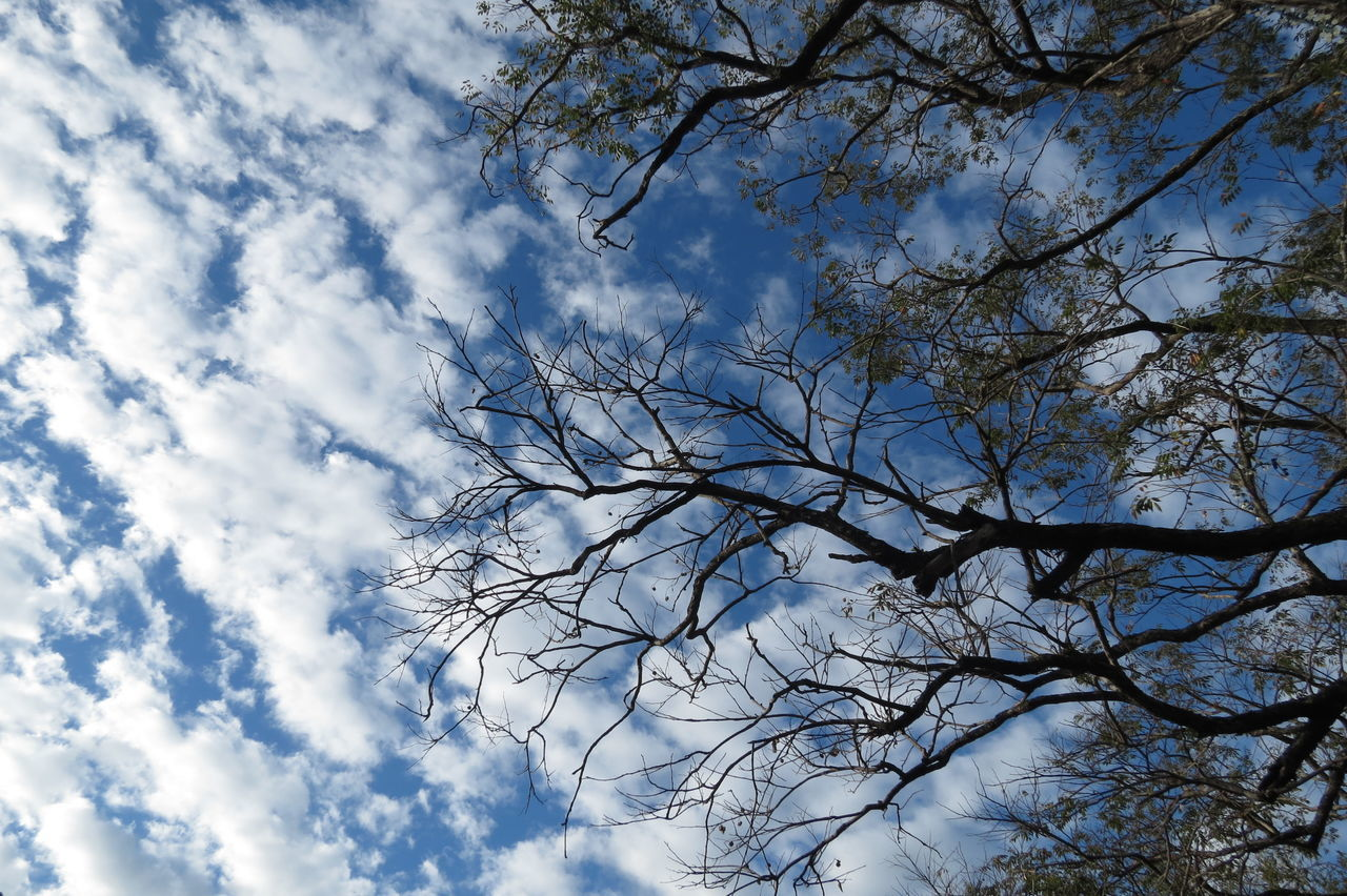 best weather for calle crisologo #art #callecrisologo #photography Bare Tree Beauty In Nature Blue Cloud Cloud - Sky Cloudy Day Growth Low Angle View Nature Outdoors Sky Tree