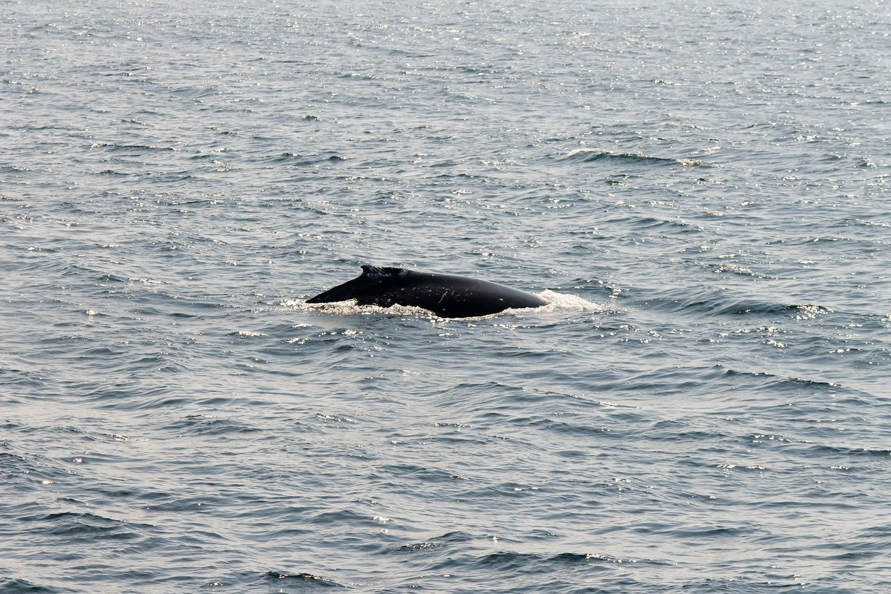 Beautiful To Watch Beauty In Nature Birds Looking For Food Calm Sea Lazzy Whale Cruising Along One Animal Only One Whale Whale Watching