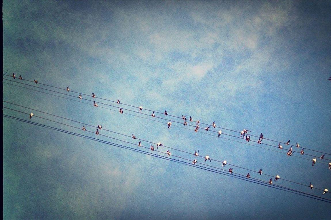 !!! Swallows Hirondelles Rondini
