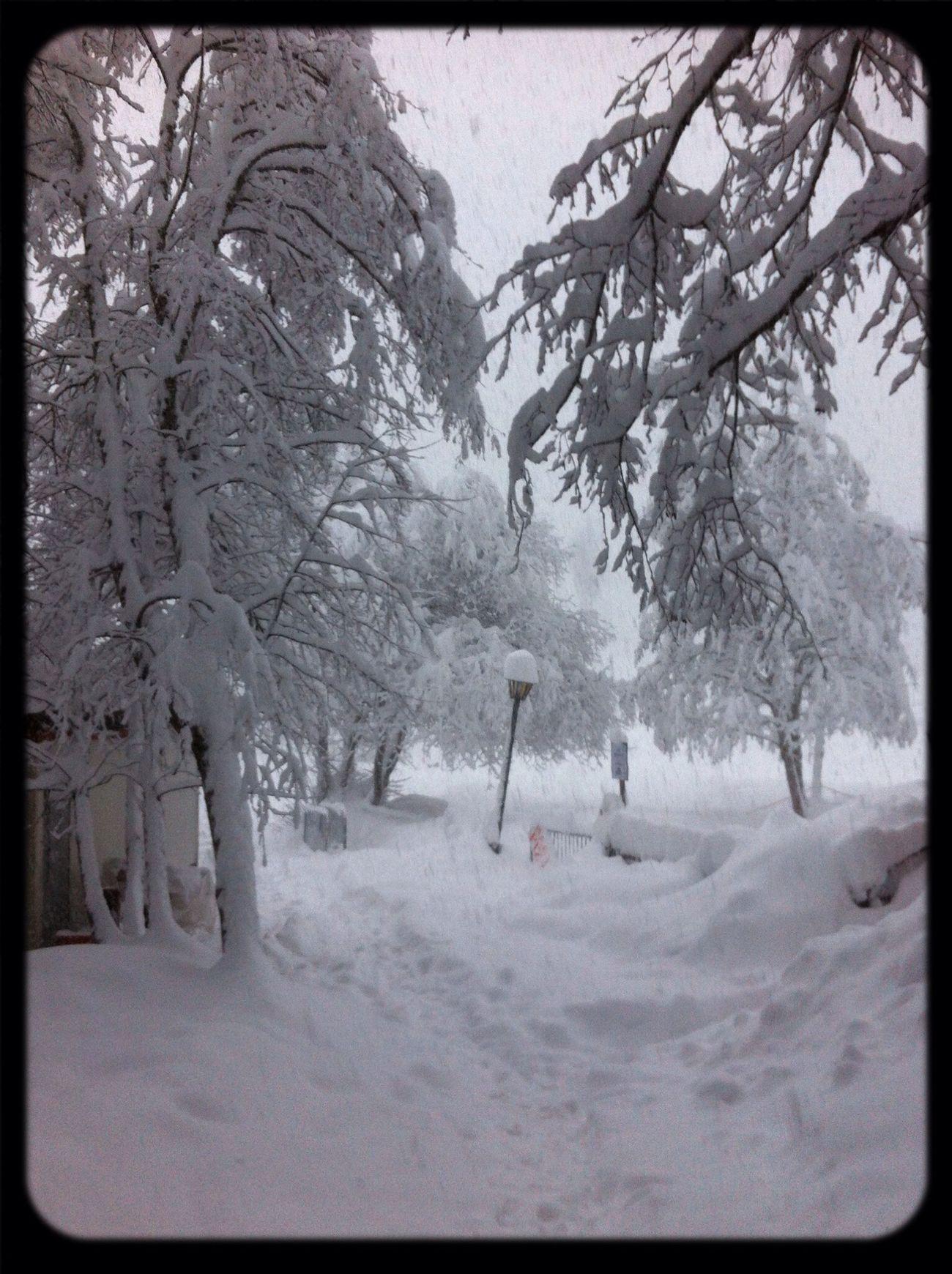Ayas sotto la neve. Snow